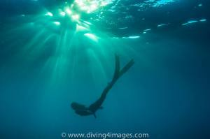 Diving 4 Images