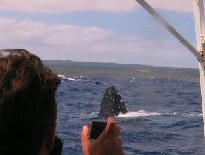 humpback whale 6