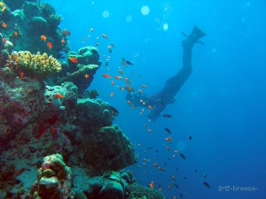 Fesduhouse reef