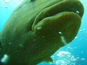 fishhead079