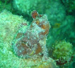 frogfish-airportcaves0897