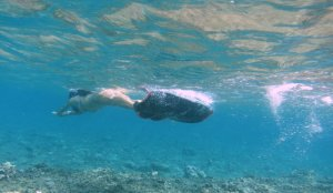 snorkeling with monofin